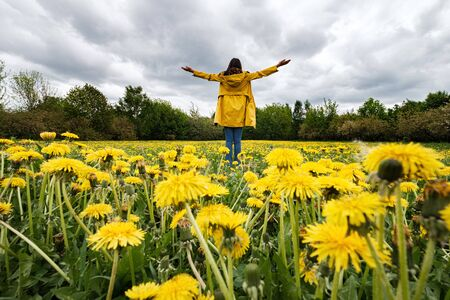 Portrait of a beautiful woman in a yellow cloak with arms raised on a field of flowering dandelions. Stormy sky in spring Banque d'images