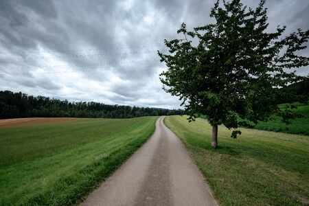An empty country road through the green fields on a cloudly summer day. Forest in the background. Grey storm clouds. Lonely tree by the road