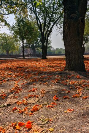 Sukhothai Historical Park, in Thailand, flowers under the trees, mobile photo