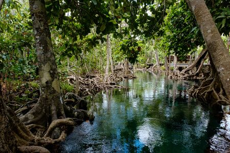 Emerald Pool or Tha Pom Klong Song Nam at Krabi Province, Thailand. Amazing crystal clear emerald canal with mangrove forest. Beautiful nature landscape. Travel, holidays, recreation concept Imagens