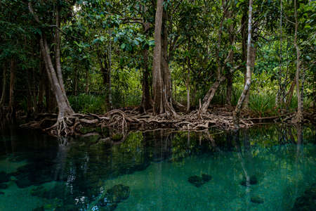 Emerald Pool or Tha Pom Klong Song Nam at Krabi Province, Thailand. Amazing crystal clear emerald canal with mangrove forest. Beautiful nature landscape. Travel, holidays, recreation concept