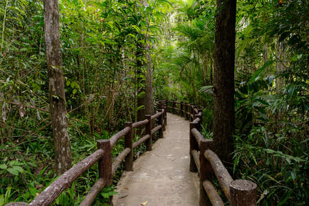 Southeast Asian tropical rainforest with path, Thailand. Jungle landscape. idea and concept of adventure, recreation from the noise of the city Stockfoto