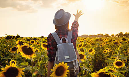 Beautiful young girl enjoying nature on the field of sunflowers at sunset. a young Asian traveler wearing a plaid shirt, hat and jeans walks in a field
