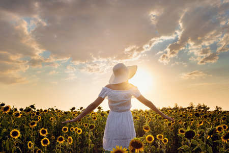 Beautiful young woman enjoying nature on the field of sunflowers. stands back and looks at the sunset, the girl raised her hands in the air, beautiful back sunset light. Standard-Bild