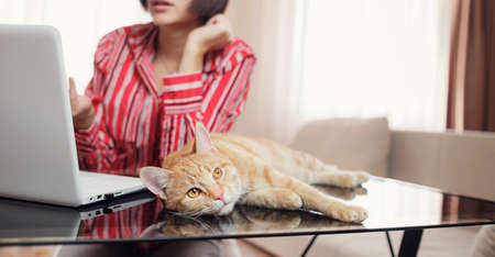 business woman in a red shirt with a ginger cat is sitting at a table in the home office and looking at an open laptop. A woman communicates via video conference while the cat is on the table