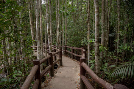 Emerald Pool, Yosemite National Park, Krabi, Thailand, Wooden path trough jungle forest. Forest before the storm