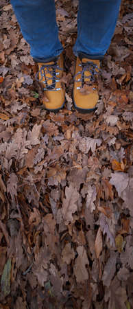 Conceptual image of female legs in yellow trecking boots on the autumn leaves. Feet shoes walking in nature