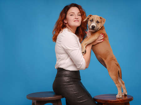 beautiful redhead woman with Cute puppy American Staffordshire Terrier posing in studio over blue background. Concept of care, education, obedience training, raising pets Stock Photo