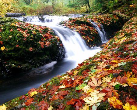 drake: Drake Falls in Silver Falls Oregon - Angle