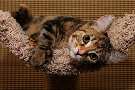 Cat at rest on scratching post Stock Photo
