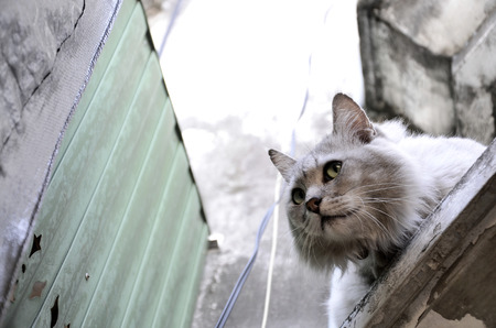 hesitation: Fear Cat