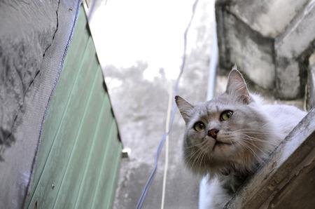 HESITATE: Hesitate Cat