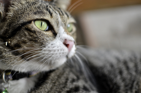 moggy: Yellow eye of cat