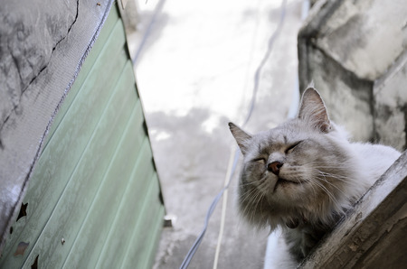 Homeless cat in the city (Select focus) Stock Photo