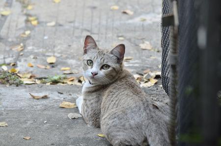 moggy: Cat portrait (Selective focus)