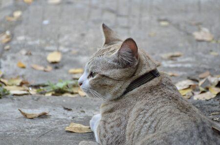 Cat portrait (Selective focus)