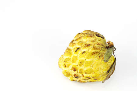 Single custard apple with white background with isolate   Stock Photo