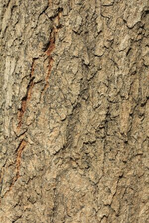 Texture of wood background close up photo