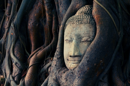 Buddha head is covered with roots, Wat Mahathat in Ayutthaya, Thailand