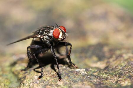 Insect Fly Macro Shot on a rock