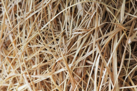 Close up textured bird nest woven with dry grass Stock Photo - 14971600