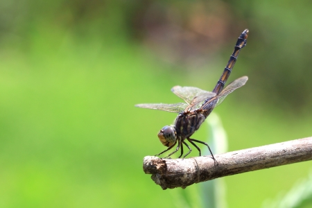 Dragonfly on background of green  grass sitting on branch photo