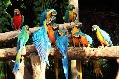 Group of beautiful parrot macaws on  tree  photo