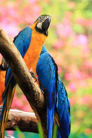 ararauna: Azul y amarillo guacamayo Ara ararauna sentado en log