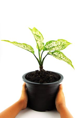 Young plant in hands on white background photo