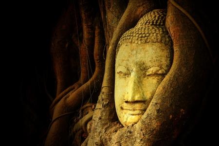 Buddha head in tree Wat Mahathat, Ayutthaya, Thailand Imagens - 21063121
