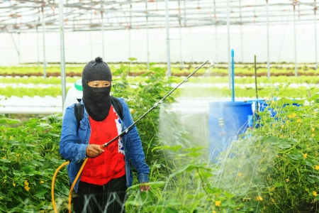 Protecting vegetables from vermin with pressure sprayer Imagens - 22056984
