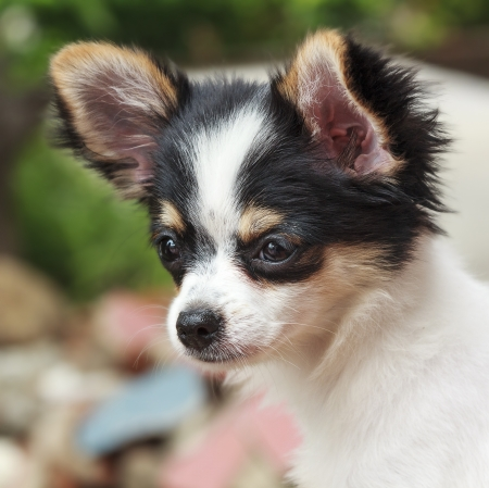 Close up of a cute little dog  photo