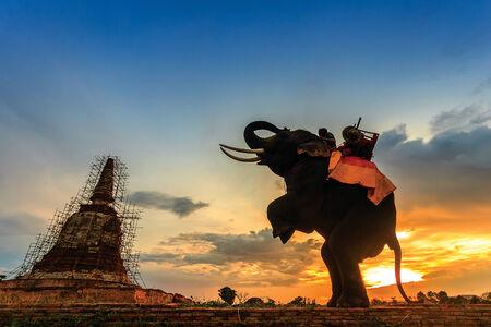Elephants and stupa at Ayutthaya in Thailand  Imagens
