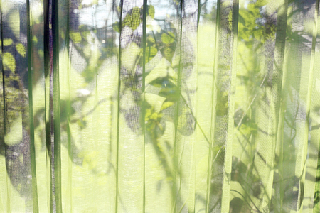 The green see-through curtains. Visible shadow behind leaves. background. Stockfoto