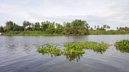 Water hyacinth floating in the river. Stock fotó