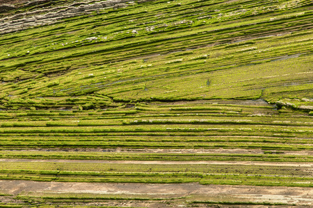 rasa: Horizontal strata of the tidal platform in the coast of Zumaia, Basque Country, Spain. Stock Photo