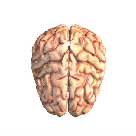 losing knowledge: human brain isolated and white background.3d render.