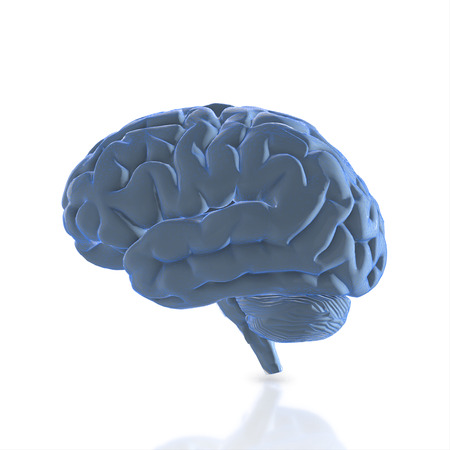 human brain isolated and white background.3d render.