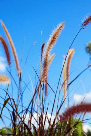 Beautiful flowers and Blue sky photo