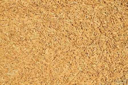 Rice seeds background photo