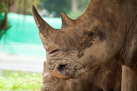 close up photo of  white rhino photo