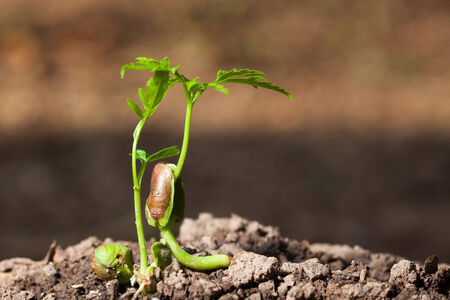 plant seed: young plant growing from seed