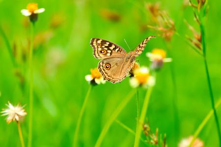 eyespot: tropical butterfly