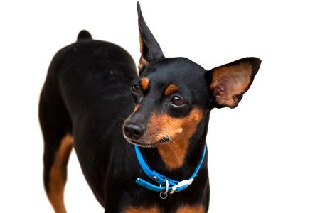 dogie: Close-up of dog Stock Photo