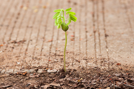 seed growing through crack in pavement photo