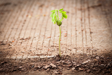 seed growing through crack in pavement Stock Photo - 29495229