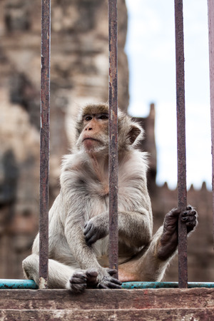 couching: monkey in a cage with sad eyes