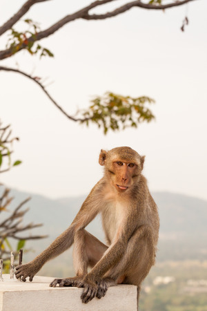 agression: monkeys cute Stock Photo