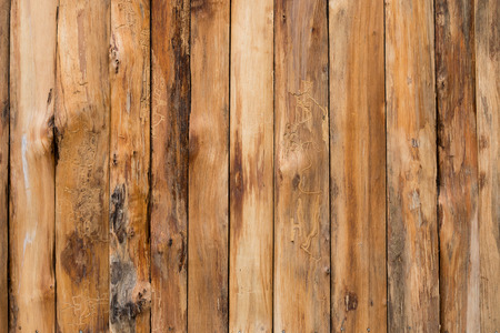 panel ling: Wood log textured for background