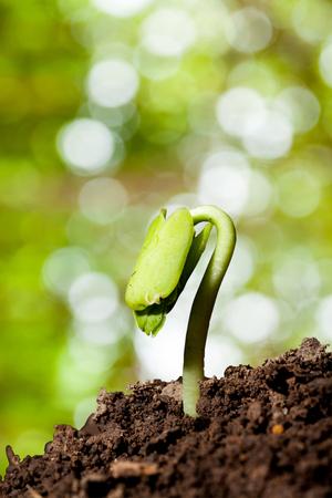 agricultura: cerrar Nueva planta de la vida cada vez mayor de la semilla